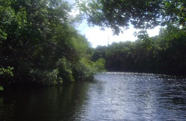 AAEA - CISMAG / Découverte de la rivière de Vieux-Fort